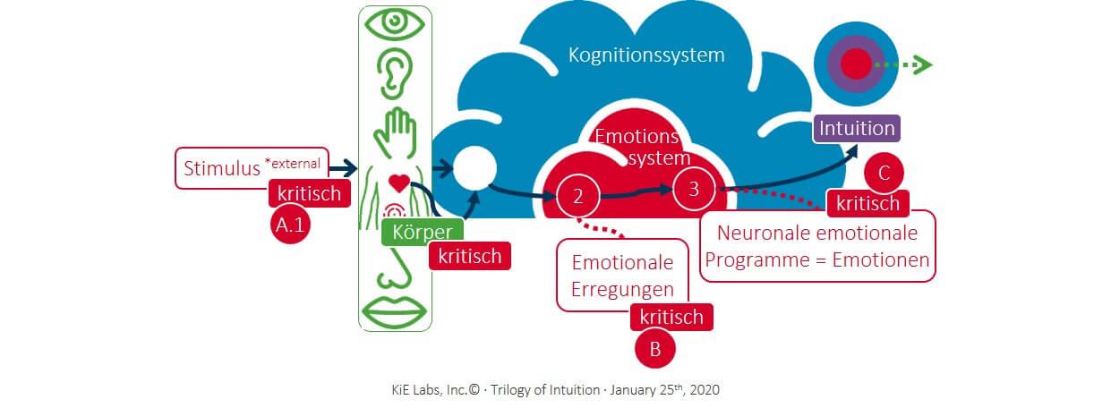 KiE: Wie die Intuition entsteht
